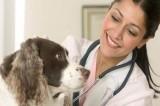 Veterinario è il nostro miglior amico contro pulci e zecche