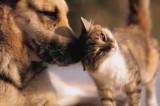 Collegato ambientale: è vietato pignorare cani e gatti