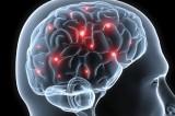 Chi non dorme ha un cervello più piccolo