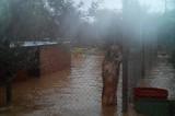 Canili sommersi dall'alluvione. I social media salvano i cuccioli