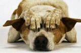Cancro. La nuova frontiera per la diagnosi: il naso dei cani