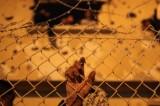 Scontri a Gaza, ma a giorni saranno liberati 26 detenuti palestinesi