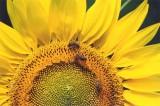 Il ronzio di BeeLife a difesa delle api e della biodiversità