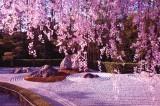Profumo di primavera: i 10 giardini più belli da visitare nel mondo