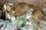 Cuccioli verdi in Spagna: continua il mistero