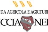 Buccia Nera è bio: vini e olio di tradizione toscana