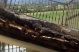 L'Aquila, a 5 anni dal terremoto, crolla balcone del progetto C.A.S.E