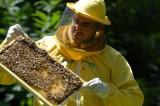 Le api raccontano la verità sulla Terra dei Fuochi, parola di Conaproa