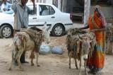 India: donna accusata di omicidio obbligata a sfilare nuda su un asino