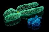 Sei un fumatore uomo? Il tuo cromosoma Y potrebbe essere cancellato
