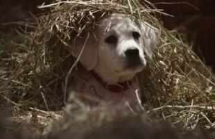 Super Bowl 2015, gli spot pubblicitari più belli: dalla Bud ai Minions