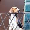 Carcere per chi trascura il proprio cane