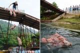 Cina: lo spettacolo acclamato (e criticato) dei maiali volanti