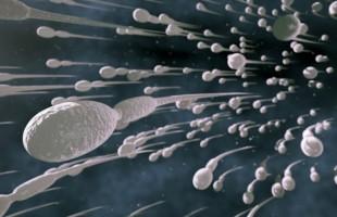 Amate le avventure occasionali? I vostri spermatozoi sono migliori