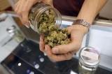 Legalizzazione cannabis, presentata proposta di legge alla Camera
