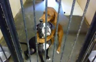 Kala e Keira, l'abbraccio commovente le salva dall'eutanasia