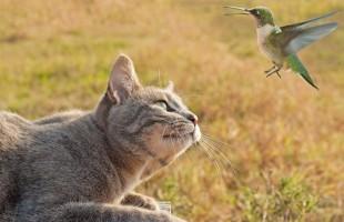 Abbattere due milioni di gatti, il piano del governo australiano