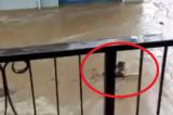 VIDEO Alluvione Rossano, uomo nuota nel fango per salvarsi