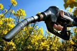 Scarti d'uva trasformati in carburante: lo studio australiano