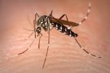 Caso di dengue a Bologna. Disinfestate le aree pubbliche
