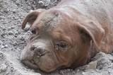 Parigi, scoperta shock: cane sepolto vivo, viene salvato da passante