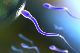 Fecondazione: in Francia ottenuti primi spermatozoi in vitro al mondo