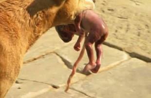 La storia del cane randagio che salva un neonato: bufala o realtà?