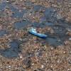Allarme degli scienziati: dal 2050 più plastica che pesci nei mari