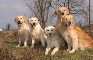 Unione Europea, un passo in avanti verso l'anagrafe di cani e gatti