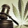 Ue: legalizzare la cannabis per togliere il business alla criminalità