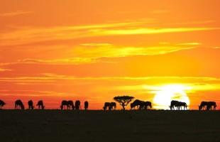 Organizzare una vacanza in Africa: ecco importanti consigli per un viaggio indimenticabile