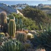 Passeggiate nella bellezza: alla scoperta dei giardini della Sardegna