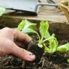 La cura del verde trova un alleato nella tecnologia 2.0