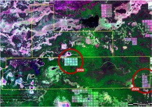 Foto satellitari rivelano nuove deforestazioni