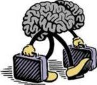 thumb_cervelli_fuga