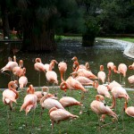 National Zoological Gardens & Pretoria Zoo - Photo by 2010 FIFA World Cup Organising Committee South Africa