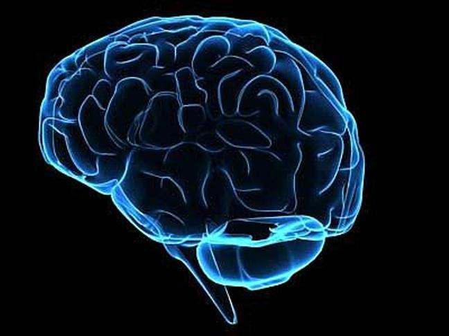 dimensione-cervello