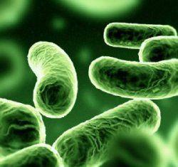 Il batterio Klebsiella Pneumoniae