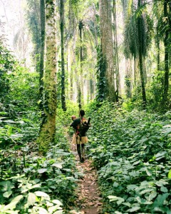 L'atmosfera magica di una foresta