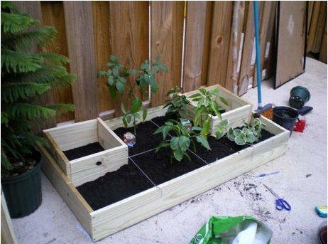 Coltivare l\'orto sul terrazzo di casa - Wakeupnews