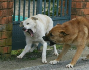 aggressioni-di-cani-pistoia