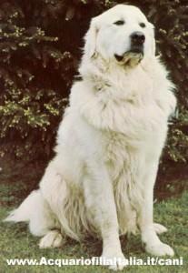 cane dei pirenei, sesso con cane