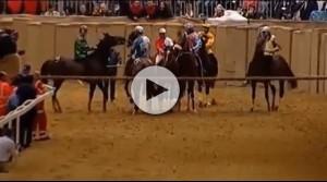 cavallo palio asti
