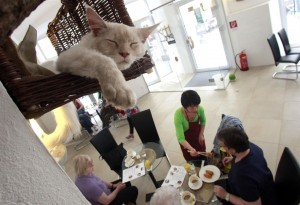 Neko cafè, i bar dedicati ai gatti