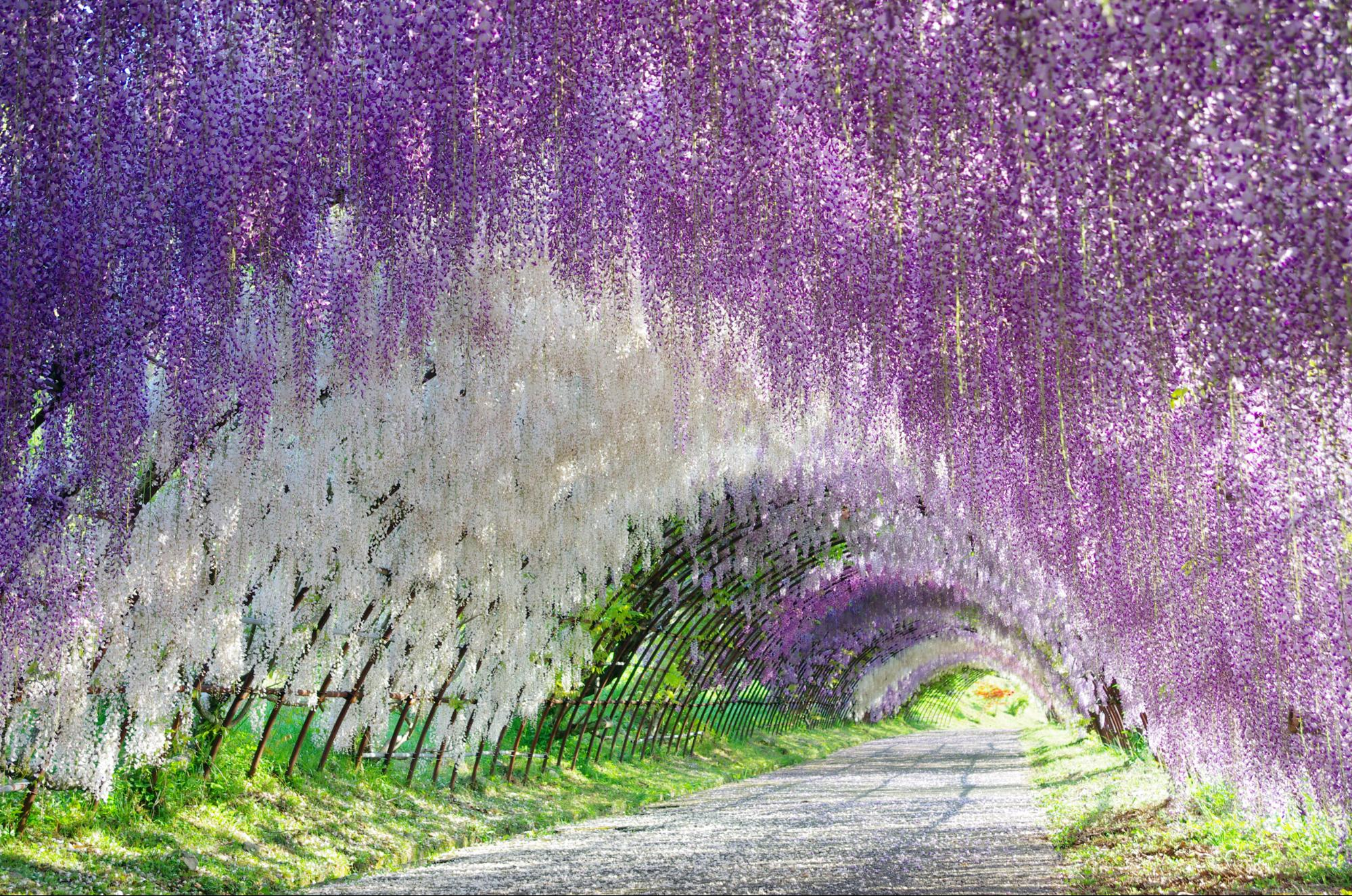I 20 paesaggi colorati più belli del mondo dove la natura si tinge di arcobaleno  (18)