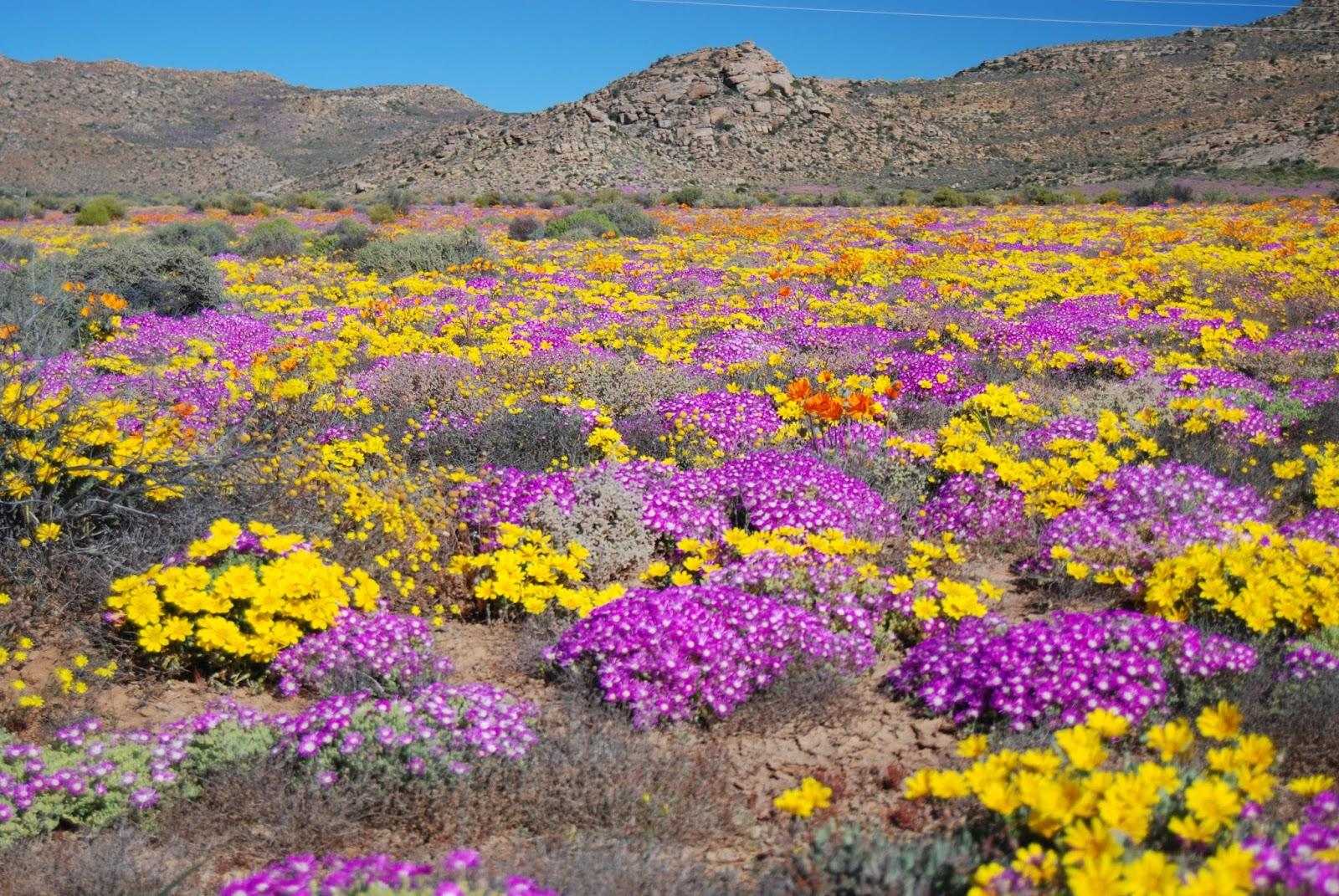 I 20 paesaggi colorati pi belli del mondo dove la natura for I murales piu belli del mondo