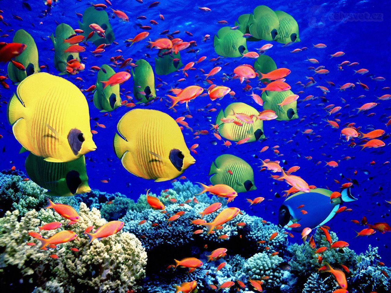 I 20 paesaggi colorati più belli del mondo dove la natura si tinge di arcobaleno   (7)