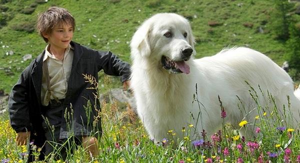 I 10 cani pi famosi del cinema e della televisione for Razza del cane di tequila e bonetti