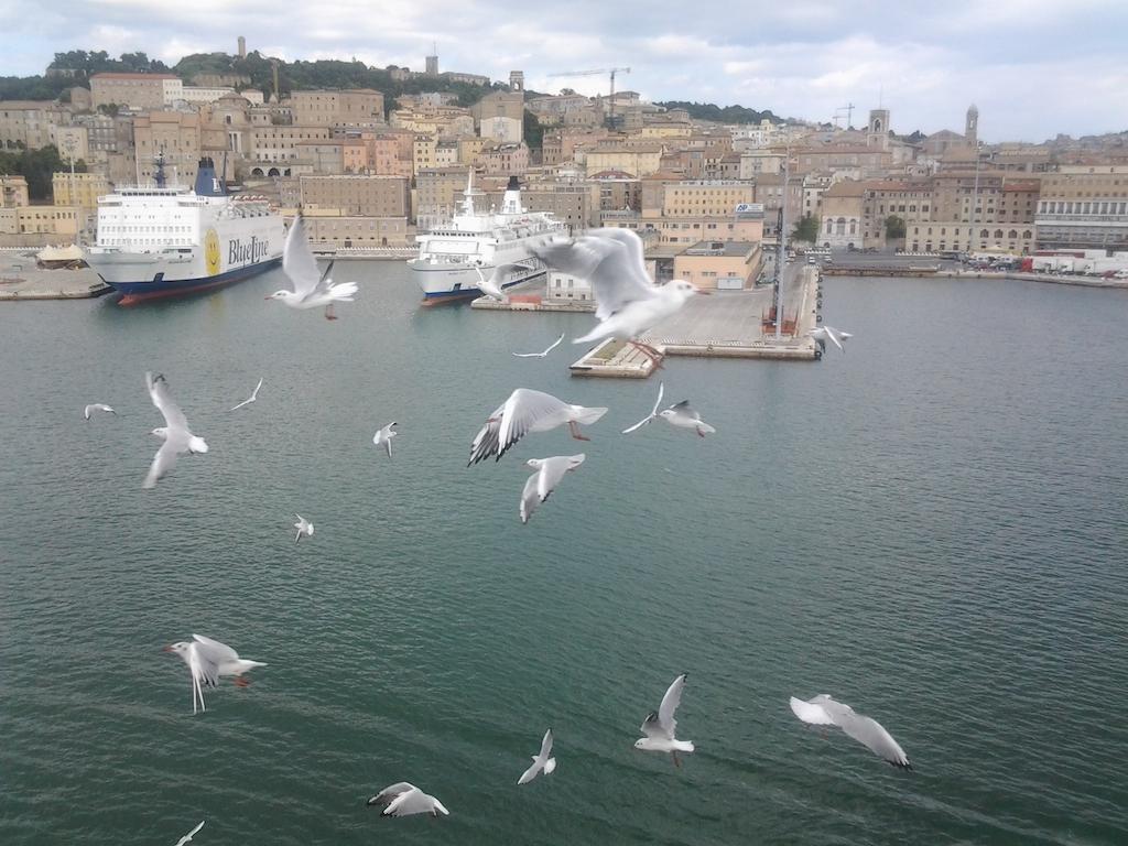 Arrivo al porto di Ancona