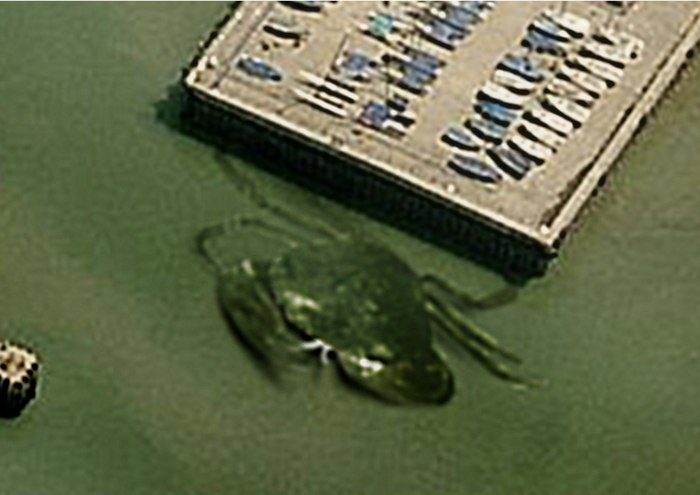 crabzilla-granchio-gigante-zoom-inghilterra-bufala